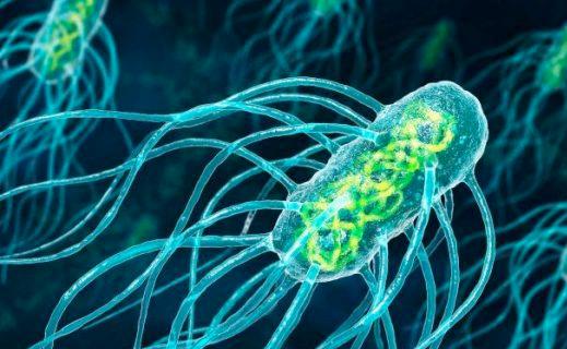 Say no to bacteria